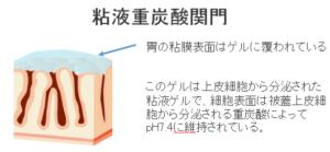 粘液重炭酸