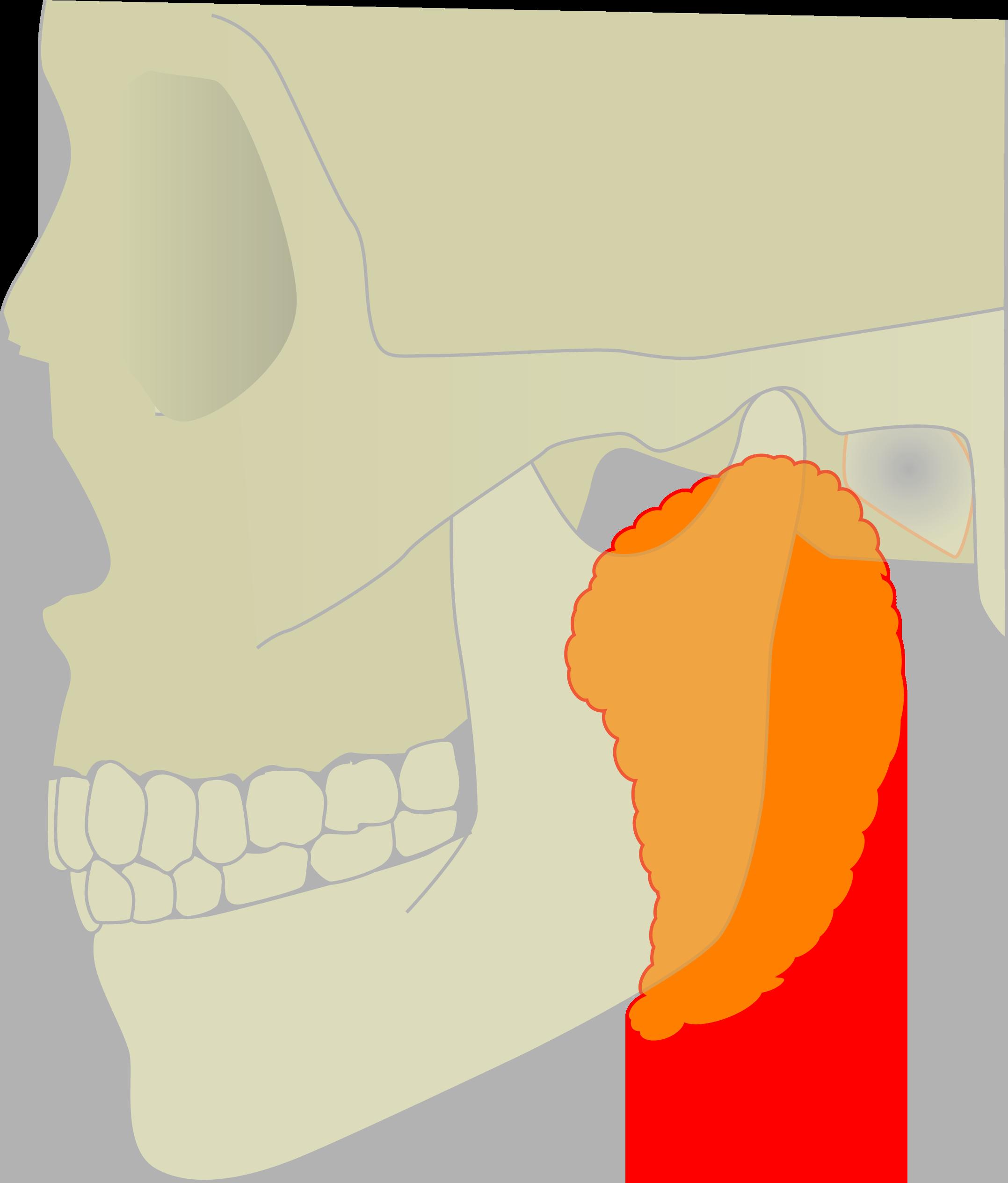 下 リンパ 押す と 痛い の 耳